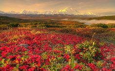 spring wallpaper | wallpaper title spring landscape wallpaper category spring your screen ...