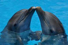 Nade con los delfines en Cancún Riviera Maya en Playa del Carmen