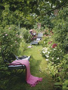 Några av över hundra rosbuskar i full blom. Flertalet är gammeldags rosor, men här finns också andra...