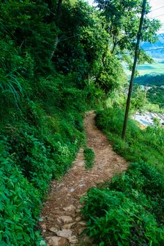 Lower section of the trail. Single tracks that will blow your mind away.