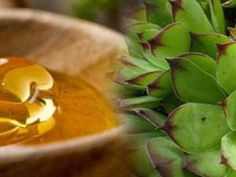 Together with raw honey, this leaf is widely used to treat uterine fibroid and cysts without any side effects. This leaf Aloe Vera, Planting Flowers, The Cure, Succulents, Leaves, Healthy Recipes, Plants, Nature, Blog