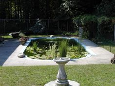 65 best pool to pond conversion and building ponds images - Swimming pool to fish pond conversion ...