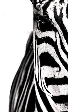 Black and white, part of a zebra selected for you by www.designstraps.de everything a photographer loves, come around: www.designstraps.com #zebra #animal #black #photography #macro #amazing #camera