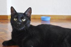 SOLIMAN - Gato adoptado - AsoKa el Grande