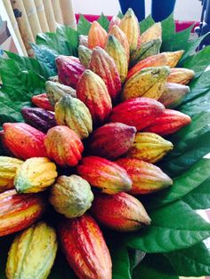 Chocolate Tree, Cacao Chocolate, Organic Dark Chocolate, Fruit Plants, Fruit Trees, Fruit And Veg, Fruits And Vegetables, Cash Crop, Cacao Beans