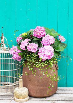 Hortensia on upea kasvi jo itsessään, mutta yhdistelemällä sitä muiden kesäkukkien kanssa saat terassin tai parvekkeen todella kukoistamaan. Poimi parhaat ideat tästä!