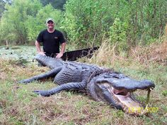 Georgia Alligator Hunting Guided By State Nuisance Alligator Trappers