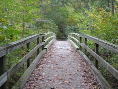 Wouldn't it be terrific to be taking a walk through these woods right now?  Over the bridge and onto an adventure!
