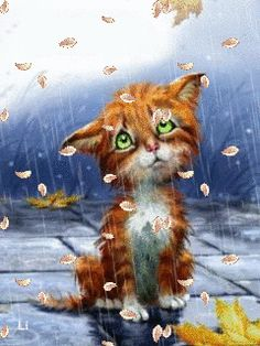 under the rain Here Kitty Kitty, Hello Kitty, Sad Kitty, Animals And Pets, Cute Animals, Image Chat, Gif Animé, Beautiful Gif, Cool Animations