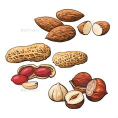 Buy Collection Of Almond, Hazelnut And Peanut Heaps by Sabelskaya on GraphicRiver. Collection of almond, hazelnut and peanut heaps vector illustration isolated on white background. Food Drawing, Drawing For Kids, Botanical Illustration, Illustration Art, Room Paint Designs, Tienda Natural, Image Fruit, Shell Drawing, Desserts Drawing