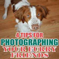 Photographing animals is very similar to photographing children. They're unpredictable, move fast Rabbit Litter, Pet Rabbit, Getting A Kitten, Cheap Pets, Rabbit Cages, Diy Projects For Kids, Kids Diy, Loyal Dogs, Owning A Cat