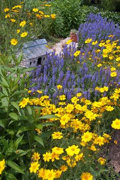 Great color combo - salvia and coreopsis