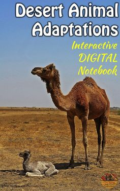 Are you students already using Interactive Notebooks?  Then make the switch to DIGITAL with this Google Slides ready resource!  17 slides that help the student research adaptations of desert animals by using websites, videos and print resources.  Answer key, scoring guide and Note Taker Sheet included!  Come check out this paid resource!