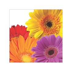 Flower Fantasy Beverage Napkins 16ct
