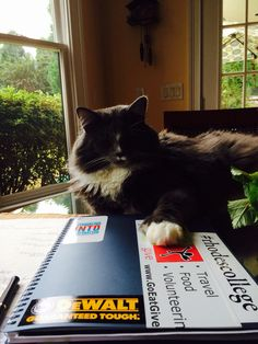 You see I'm working! Latin Words, Norwegian Forest Cat, Cairn Terrier, Happy, Animals, Gatos, Animales, Cairn Terriers, Animaux