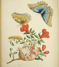 Butterflies & Flowers by Hopkins Rare Books, Manuscripts, & Archives, via Flickr