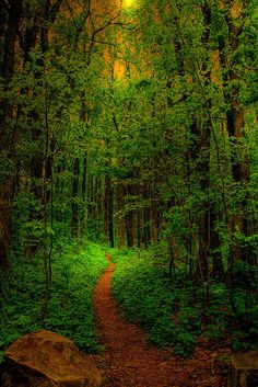 photo scenery Come walk with me in the enchanted forest and let your spirit be shaken by sights and sounds you have never imagined Foto Nature, All Nature, Amazing Nature, Forest Path, Tree Forest, Forest Trail, Forest Light, Wild Forest, Beautiful World