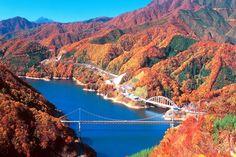 湖面に映る福井県「九頭竜湖」の色鮮やかな紅葉!紅葉と箱ヶ瀬橋の美麗なコントラストも楽しもう