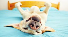 What Does Your Dog's Sleeping Position Say About Him?|CANIDAE® Blog