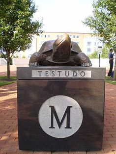 University of Maryland Terrapins - on campus statue of Testudo. There are 6 statues around campus and it's good luck to rub his nose!