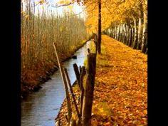 No es lo mismo el otoño en Mendoza Mendoza, San Rafael, Country Roads, Plants, Musica, Plant, Planets