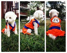 Goku costume for my dog luffy that my sister stitched http://ift.tt/2c8EKrT