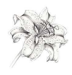 Thinking of adding a stargazer lily to my back, but a blue version.