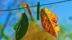 Leaves Clothespins Fall