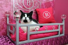 Here it is in a four poster bed. | A Luxury Hotel For Cats Has Opened In Yorkshire