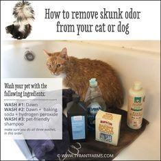 Did your pet get sprayed by a skunk? Don& panic. Read this article to find out exactly how to get skunk smell off your cat or dog. Dog Sprayed By Skunk, Skunk Spray, Dog Skunk, Getting Rid Of Skunks, Tuff Puppy, Skunk Smell, Dog Smells, Don't Panic, Pet Care