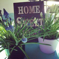 Home Sweet Home, kevät saapuu kotiin sipulikukkien avulla jo huhtikuussa :)