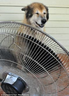 How to cool off in the summer heat