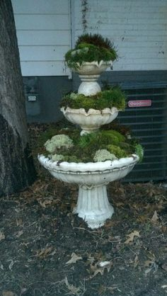 Fountain I turned into a moss garden