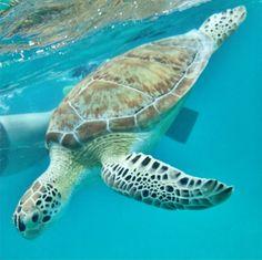 15 Reasons to Vacation at Caneel Bay in the USVI | US Virgin Islands Resort | Snorkeling