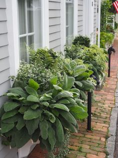 Awesome Plant Combinations For Window Boxes 1