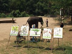 Paintings by the elephants