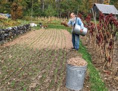 """""""Mulch With Dried Leaves"""" Spreading shredded leaves helps to control weed growth while providing soil with organic nutrients. From MOTHER EARTH NEWS"""