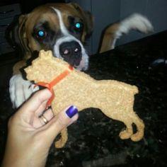 Biscoito Cão Boxer.