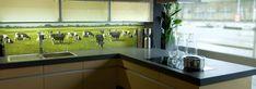 Keukens van klanten met een PimpYourKitchen achterwand: Cows in de etalage bij Tekusan