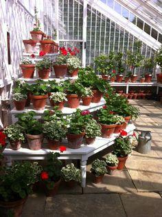 Geraniums...I Love Geraniums     =D