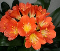 Pretty Flowers, Beautiful Roses, Houseplants, Planting Flowers, Orchids, Gardening, Bright, Make It Yourself, How To Make