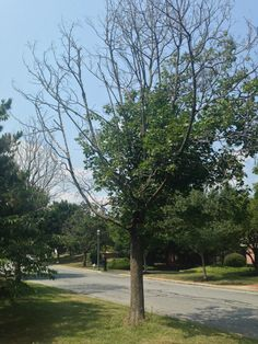 You're Afraid Your Tree Is Dying? Plant Diseases, Perennials, Sidewalk, Yard, Plants, Beautiful, Wordpress, Trees, Gardens
