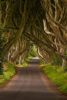 The Dark Hedges, Northern Ireland. If I could go ANYWHERE in the world, I would most definitely go to Ireland. Not necessarily The Dark Hedges, but just Ireland in general. I mean if I could only go to one place, it would be Ireland. Image Nature, All Nature, Oh The Places You'll Go, Places To Travel, Places To Visit, Dark Hedges Ireland, Future Travel, Belle Photo, Vacation Spots