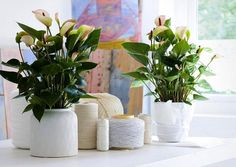 Need to brighten up your work space with a little plant life? Check out these great indoor plant ideas that will clean the air and look pretty in a pot!