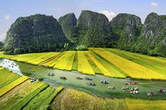 Cuc Phuong National Park (Vườn Quốc-gia Cúc-phương) is in Ninh Binh Province of Vietnam. It is homes to hundreds of species of flora and fauna. Vietnam Voyage, Vietnam Travel, Hanoi, Parc National, National Parks, Monuments, Cuc Phuong National Park, Vietnam Destinations, North Vietnam