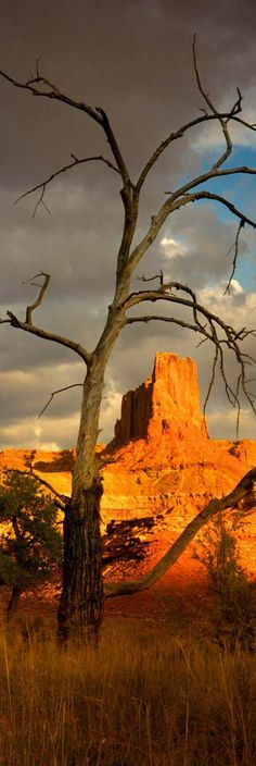 65 ideas landscaping park vacations for 2019 Vacation Destinations, Vacation Spots, Colorado River Rafting, Canyonlands National Park, Great Vacations, Monument Valley, Places To Go, Beautiful Places, National Parks