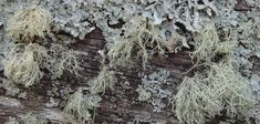 why to like lichens Photo: Linda Robertson