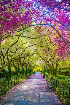 Spring in Central Park, New York City..