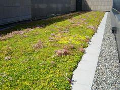 Výsledek obrázku pro roof terrace gravel