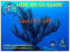 SAVE 15% on all loca dive and dive courses. Book your dive vacation for any time of the year, to take advantage of this offer you most book by September 30th. Cannot be combined with any other package or discounted pricing. #scubaschoolbelize #sanpedro #ambergriscaye #padi #Belize